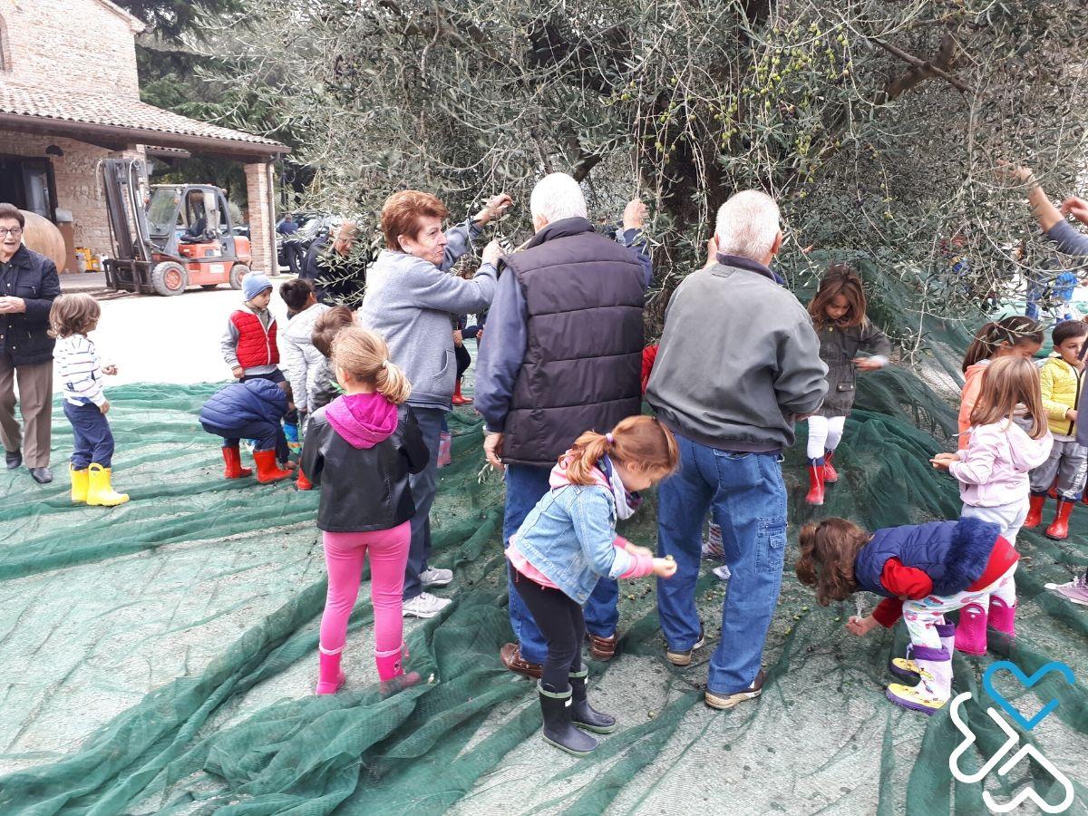 La raccolta delle olive